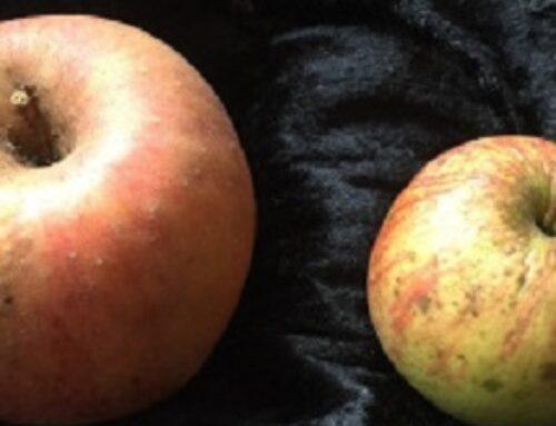 Äpfel – gestern und heute